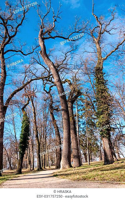 Tree-lined avenue in the rural park area