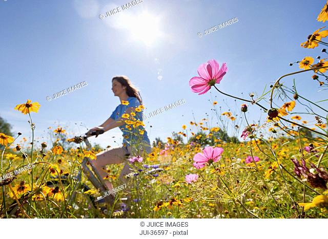 Smiling girl riding bicycle on path through sunny wildflower meadow