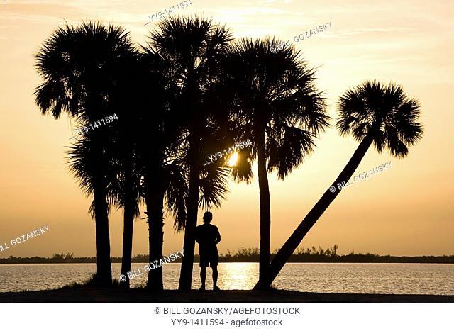 Palm Trees at Sunset - Sanibel Island Causeway - Sanibel Island, Florida