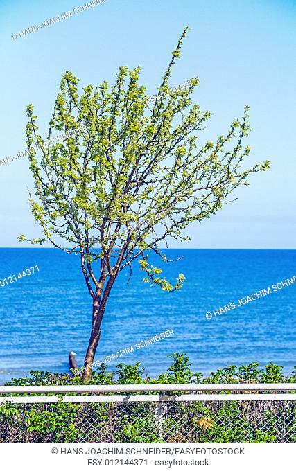Tree at the Baltic Sea