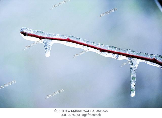 freezing rain, ice cover, Austria, Lower Austria, Southern Lower Austria, Eggendorf