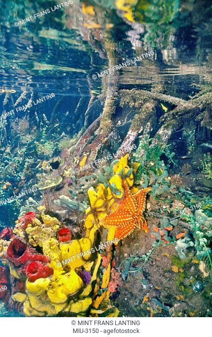 Marine life growing on mangrove roots, Tobacco Reef, Belize