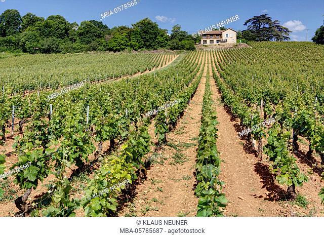Domaine Saint Michel, Rully, Burgundy, France, Europe