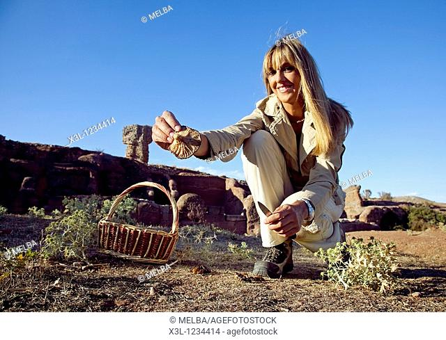 Woman pick up King oyster mushroom, Pleurotus eryngii, in Celtiberian archeological site, Soria  Castile-Leon  Spain