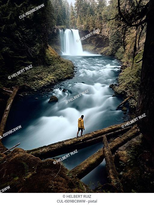 Man crossing river, Koosah Falls, Willamette, Oregon, USA