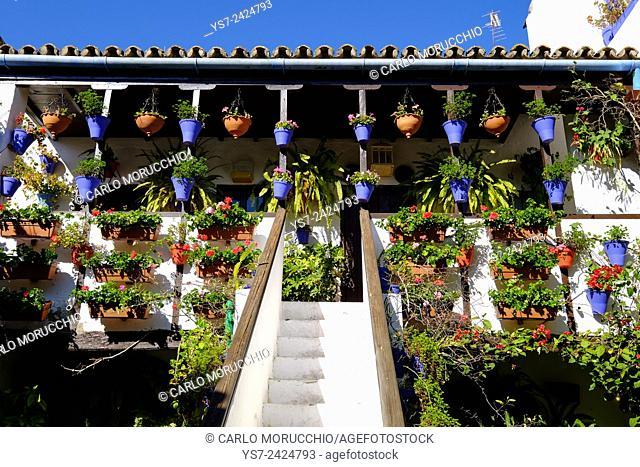 Courtyard of Casa Patio, Cordoba, Andalucia, Spain, Europe
