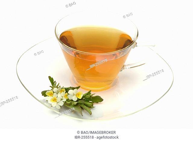 Herb tea made of Heartsease, wild pansy, Viola tricolore