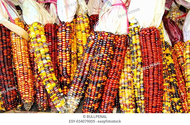 Some colorful corn displayed for the holidays