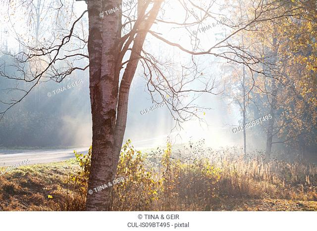 Landscape with rural road and woodland in rays of misty autumn sun, Lohja, Southern Finland, Finland
