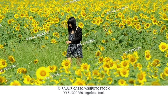 girl walking through sunflower field , sunflower fields of lopburi, and saraburi, central Thailand