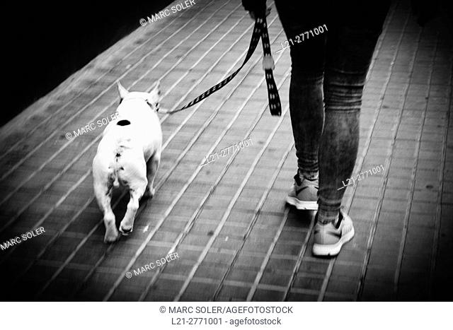A dog and its owner walking along a street. Barcelona, Catalonia, Spain