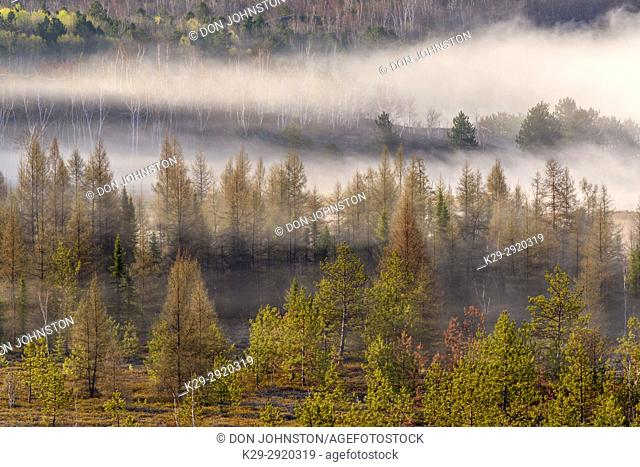 Morning mist over a leatherleaf bog with spring trees on nearby hillsides, Greater Sudbury, Ontario, Canada
