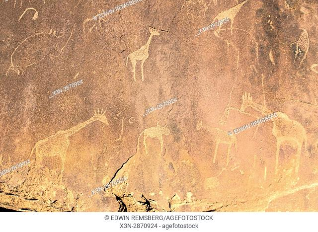 Rock carvings made by ancient tribes of Damaraland in Twyfelfontein, located in Namibia, Africa