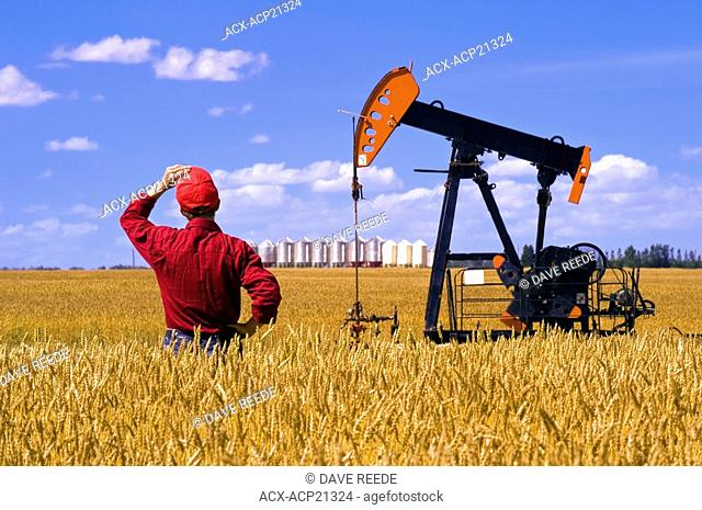 a man looks out over a harvest ready wheat field with an oil pump jack and grain bins in the background, near Sinclair, Manitoba, Canada