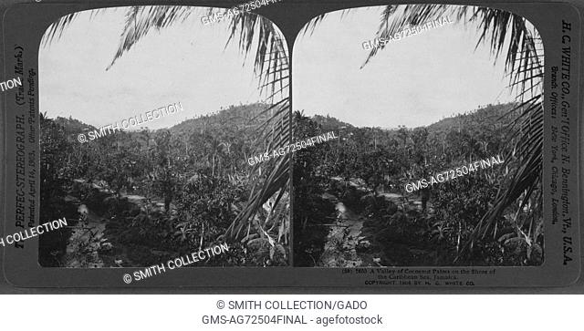Stereopticon of Cocoanut Palms and Caribbean Sea in Jamaica, 1904. From the New York Public Library