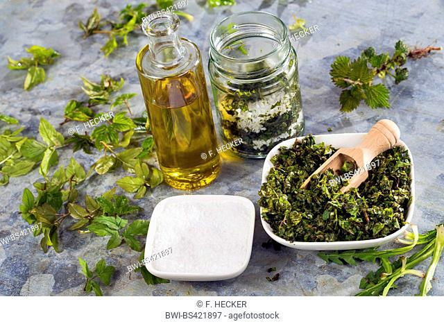making a pesto of Bishop¦s Weed, Ground Elder, dandelion and stinging Nettle, Germany