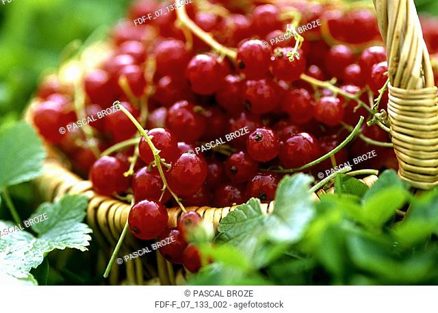 Close-up of red currants