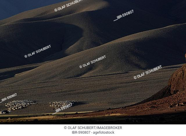 Landscape, nomads and sheep herds in the Changtang near Ali (Shiquan He), Western Tibet, Ngari Province, Tibet (China), Asia