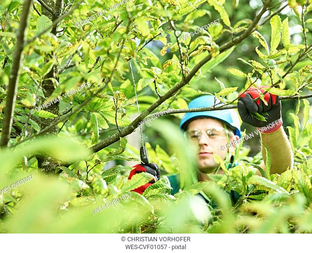 Tree cutter pruning of tree