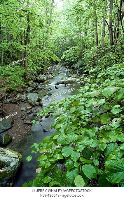 Roaring Fork, Springtime, Great Smoky Mtns Nat. Park, TN