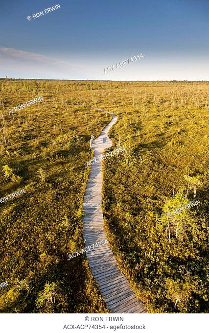 Boardwalk on the Bog Trail in Kouchibouguac National Park, New Brunswick, Canada