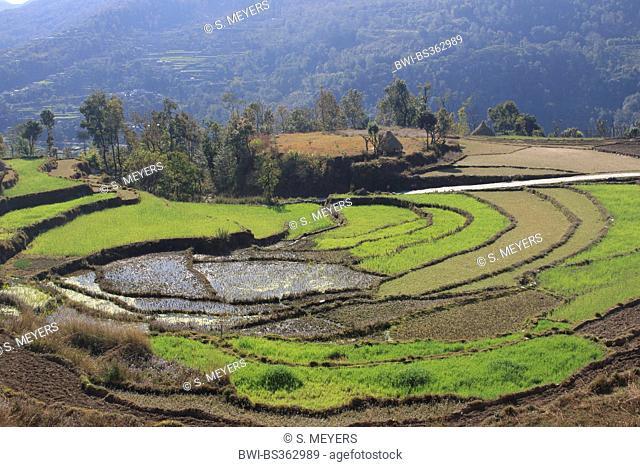 terrace farming, Nepal, Kathmandu, Pokhara