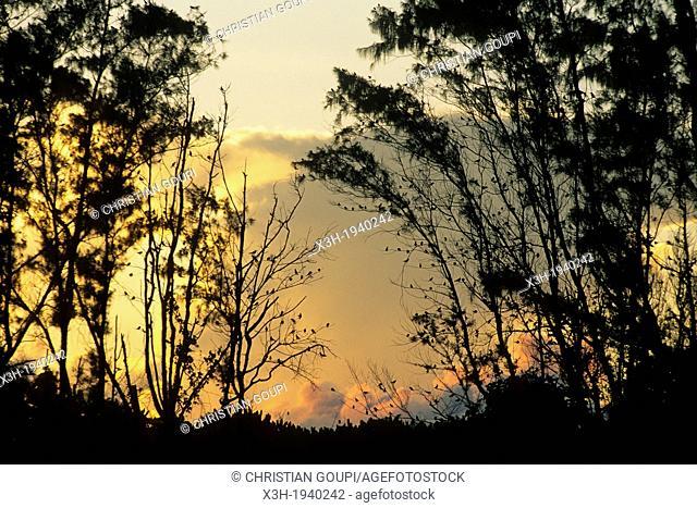 Bird Island at sunset, Republic of Seychelles, Indian Ocean