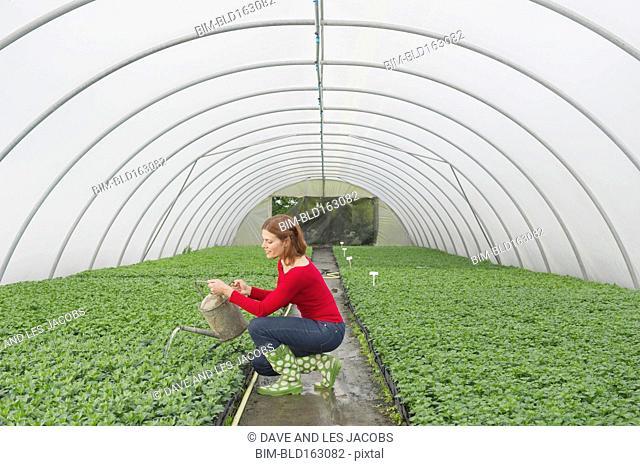 Caucasian gardener watering plants in greenhouse