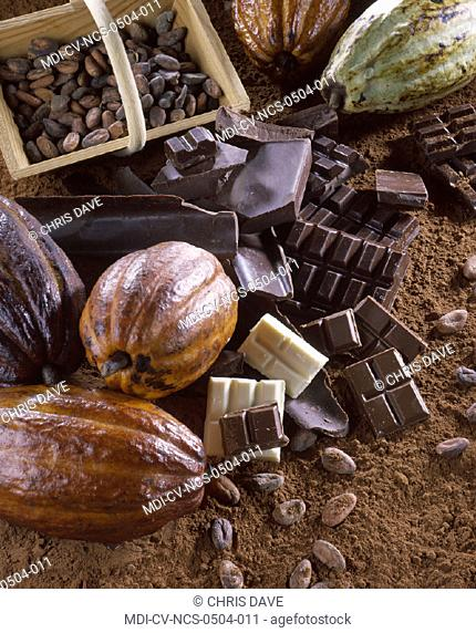 Cacao pod containing cacao beans processed to get the cacao powder which is used to get the chocolate
