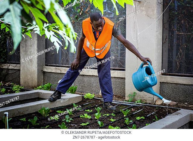 Gardener watering plants at the garden of NICE restaurant, Windhoek, Namibia