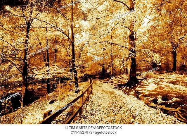autumn, lake district, cumbria, england, uk, europe