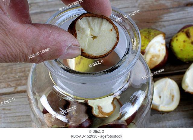 Horse Chestnut fruits production tincture Aesculus hippocastanum