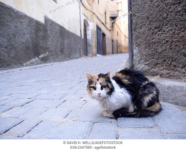 Stray cat on street in Fez, Morocco