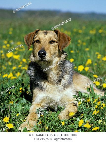 Dog laying with Yellow Flowers