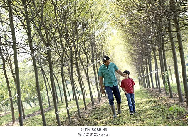 A man and a young boy walking down an avenue of trees