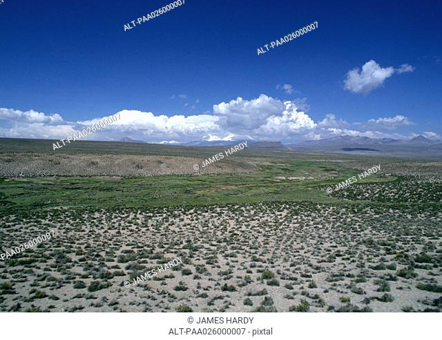 Chile, El Norte Grande, Altiplano, Lauca National Park, flatland with low grasses, clouds on the horizon