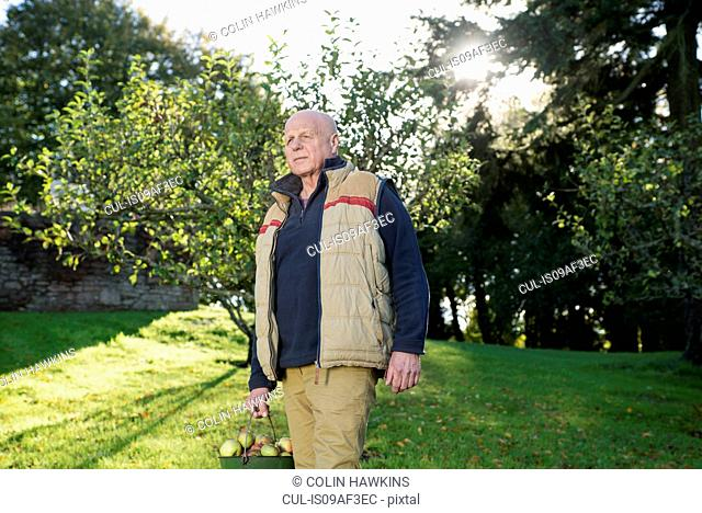 Senior man carrying bucket of apples