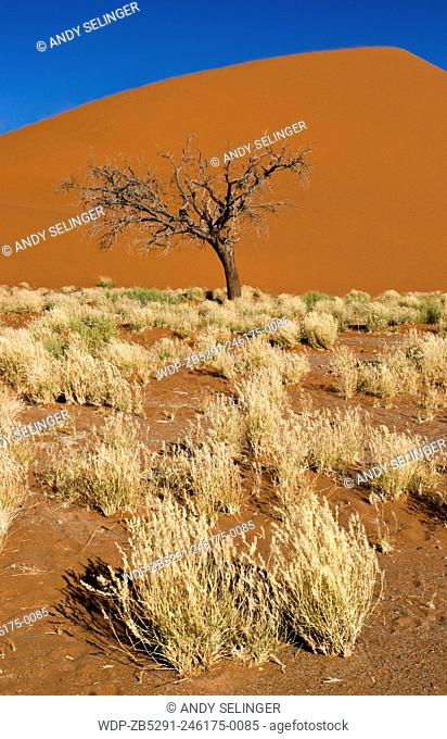 Sand Dunes in the Namib-Naukluft National Park, Namibia