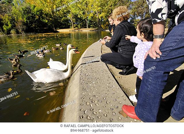 People with swans and ducks by the Osseja lake in autumn. Languedoc-Roussillon, Pyrenees-Orientales, France