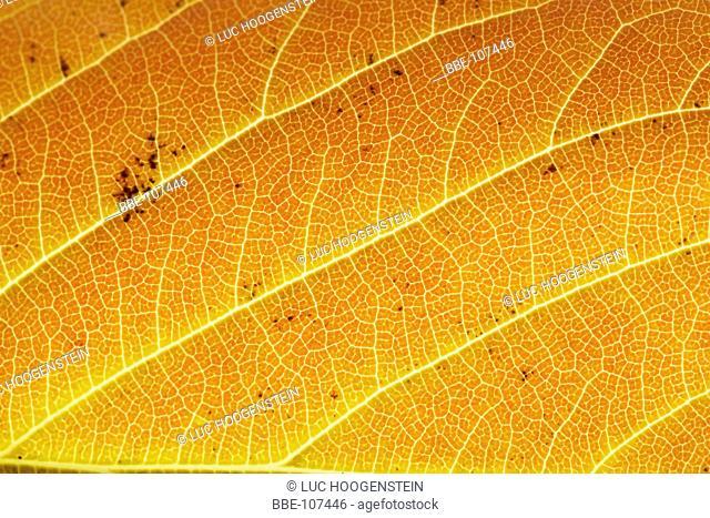 autumn colors on fallen leafs