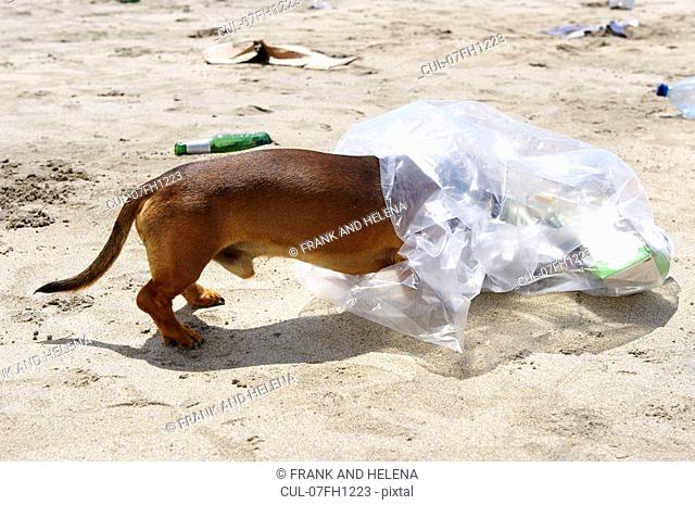 Dog with head in garbage bag