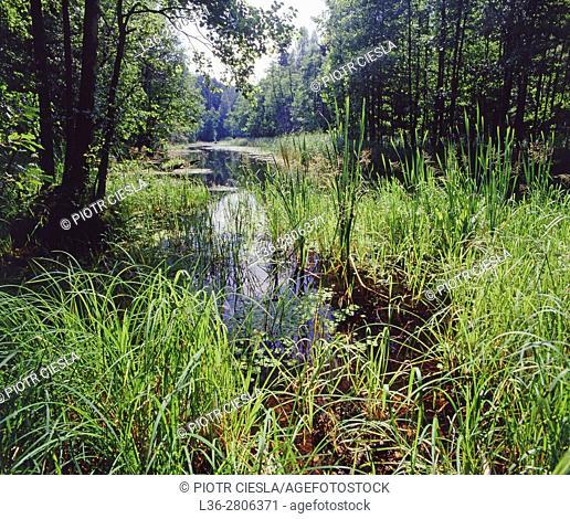 Poland. Suwalski region. Marycha lake