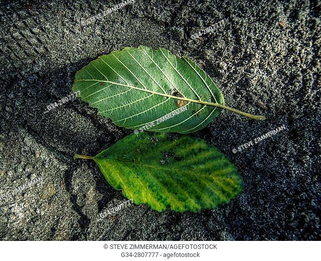 Leafy Pairing