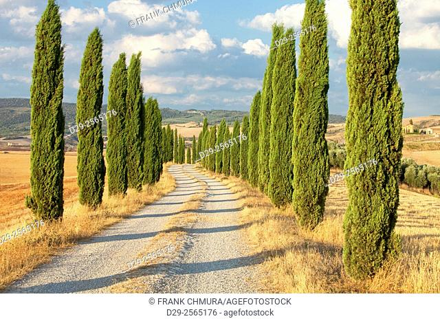 Italy, Tuscany - Country Road Lined with Cypress Trees