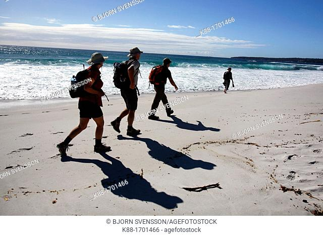 Bushwalkers walking along the Bay of Fires  North East Tasmania, Australia