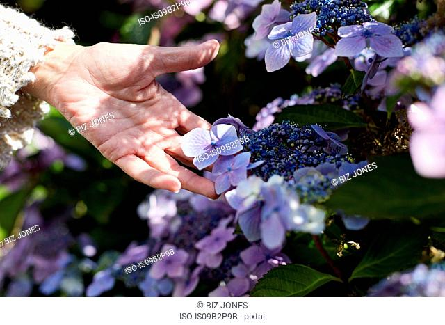 Senior woman outdoors, touching growing flowers, close-up, Cork, Ireland