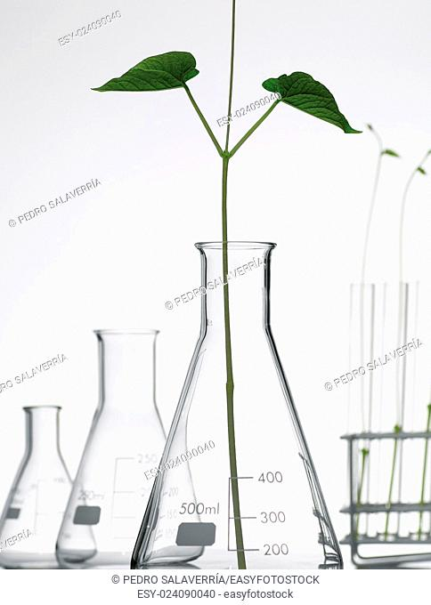 plant growing in a laboratory flasks with a white background