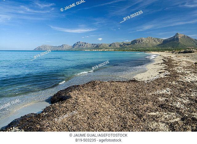 Son Serra de Marina, Alcúdia bay with cap Ferrutx at the back. Majorca. Balearic Islands. Spain