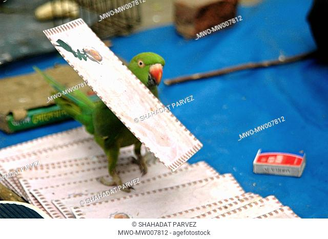 A trained parrot Shamrat whose job is to help his master a fortune teller by picking up envelops containing message of fortune for the customer Dhaka