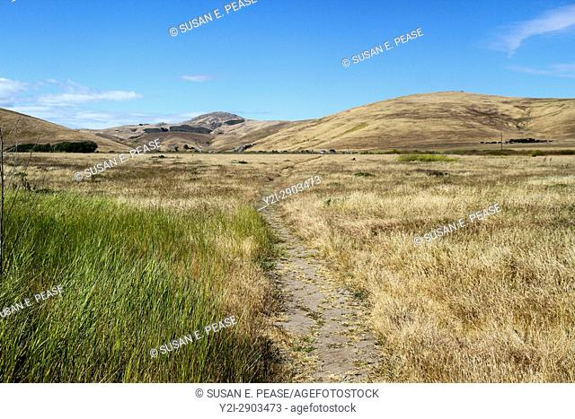 Path through the landscape near the town of Morro Bay, San Luis Obispo County, California, United States, North America